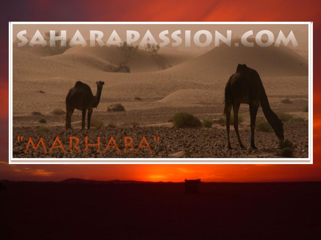 saharaPassion