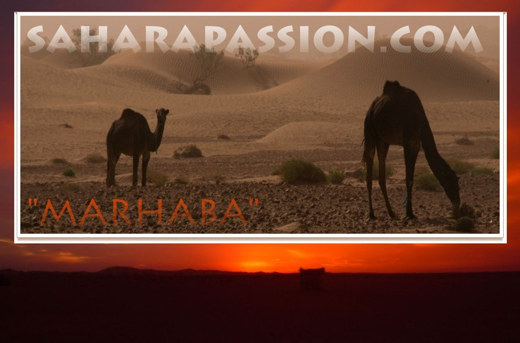 Saharapassion.com